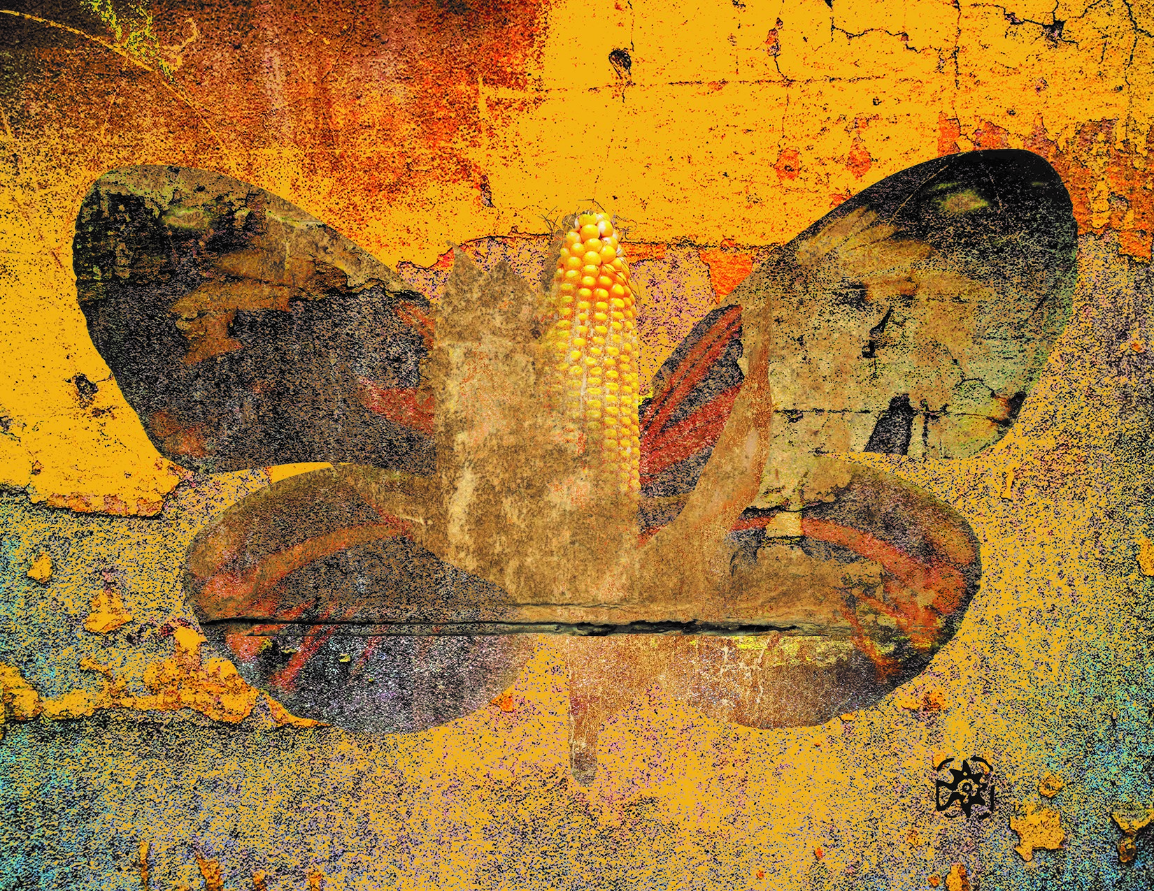 Mariposa Amarilla – Sur